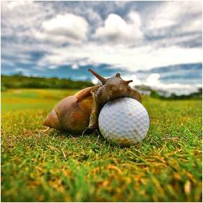 Slow Play Golf