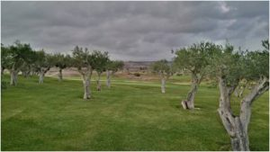 golfing-in-sicily-verdura-resort-7