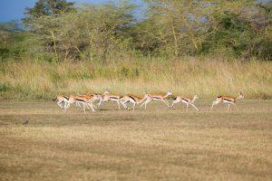 Kilimanjaro Golf & Wildlife Estate v3