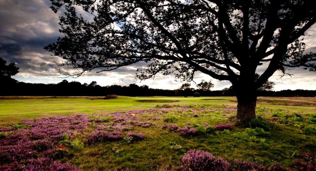 Walton Heath Golf Club, Golf Socieites Surrey, Surrey Golf Day Events - Thesocialgolfer.com v1